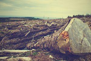clearing-desolation-destruction-4451